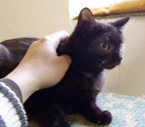 Černá máma miluje kočička